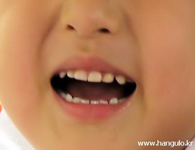 이빨? 이? 치아?