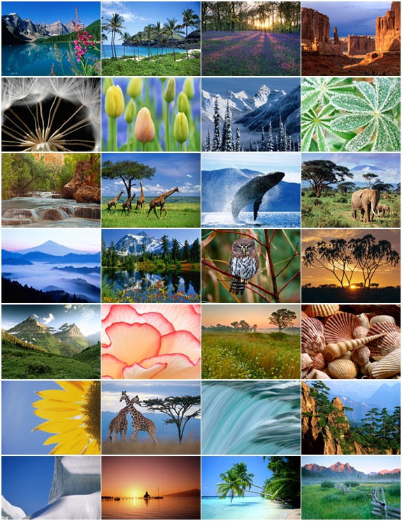 Vista Starter Edition Wallpapers