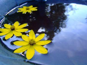 floting flower image